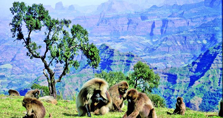 Ethiopia with the Timket Festival - Zegrahm Expeditions