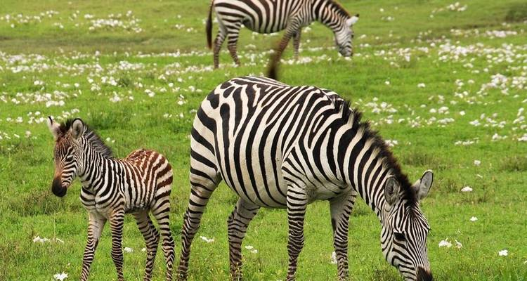 Four Day Tanzania Express Safari - Jeep Safaris and Tours