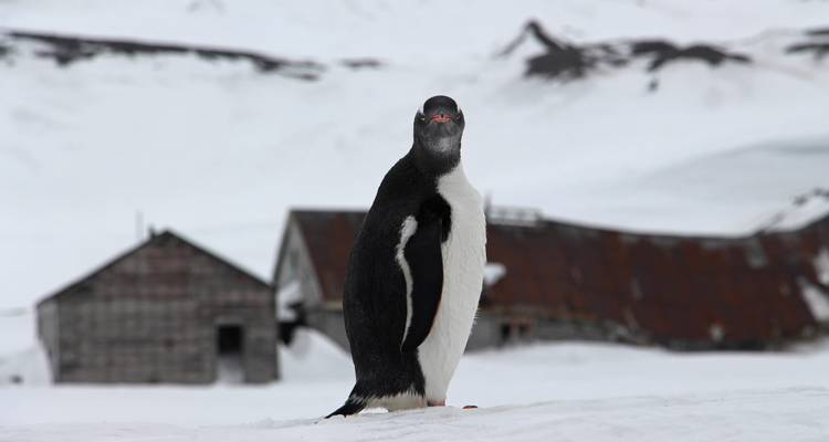 Antarctica Deep South - Exodus Travels