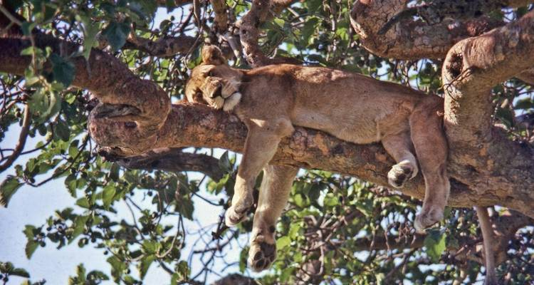 6 Days Safari in Uganda - Prime Tours and Adventure