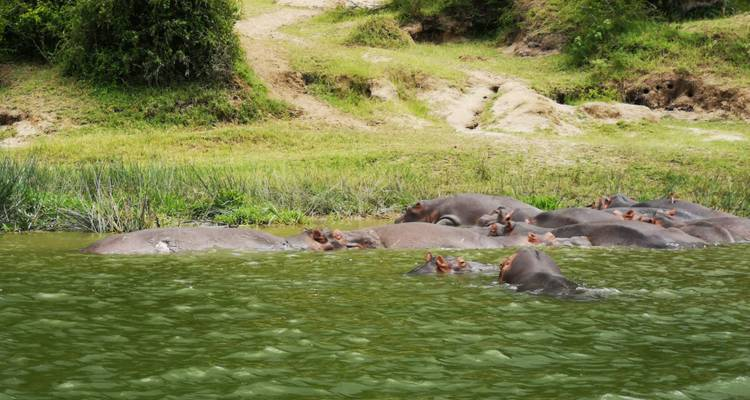 7-Day Gorillas, Chimpanzees, Tree Climbing Lions Safari in Uganda - Kajie Safaris
