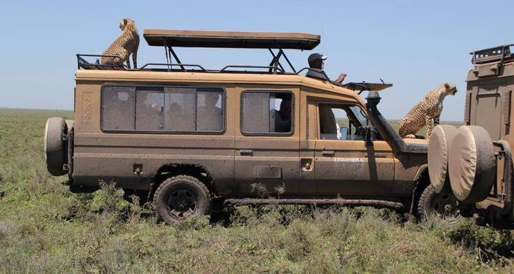 13 Days Tanzania Wildlife Safari & Zanzibar Beach Holiday - Steppe Dogs Adventures Ltd