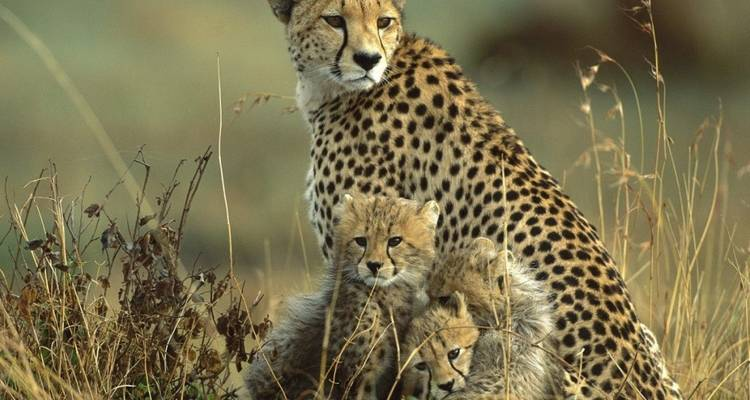 5 Days Wildlife Adventure Kenya Safari - Kenia Tours And Safaris