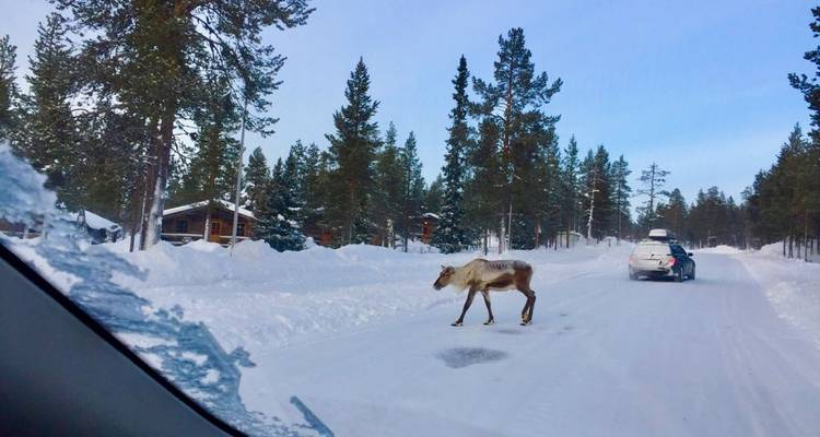 Winter Fairy Tale 6 Day tour. Helsinki - Lapland and Back - Scandi Travel