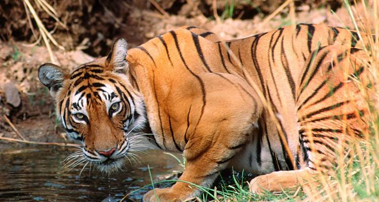Golden Triangle Tour with Ranthambore (Samai Madhopur ) - Golden Bird Journey