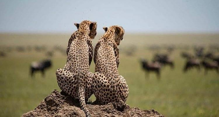 3 Days tour to africa's best parks (Serengeti & ngorongoro crater) - Safari Soles tours