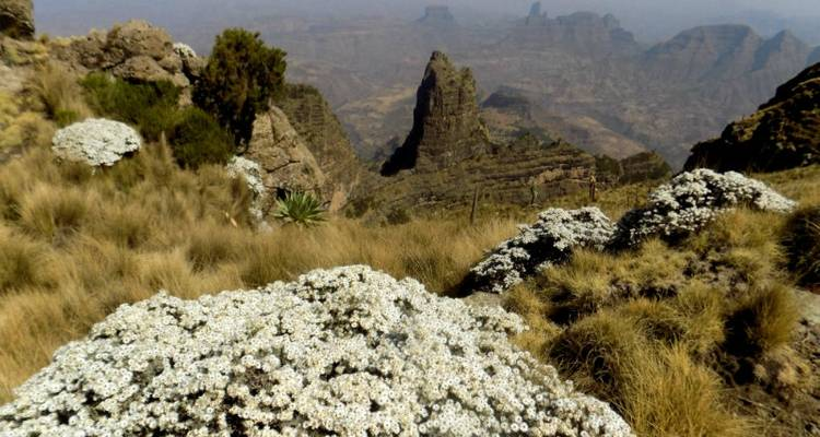 trekking in the Simien Mountains & dramatic escarpments - Tankwa Tours and Travel Agency