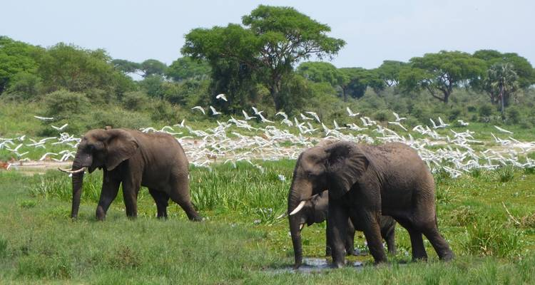 Uganda Wildlife Safari to Murchison Falls National Park – 3 Days - Rumara Safaris