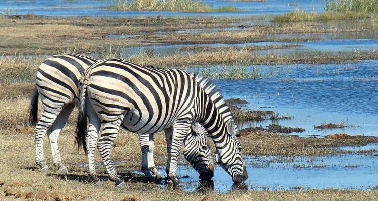 4 Days,3 Nights Tanzania Budget Mid range camping Safari Tour 1050 usd -  Travel Africa Safari Agency