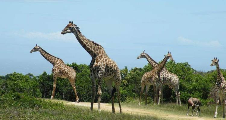 5 Days, 4 Nights Budget Camping Safari Tour Tanzania 1200 usd -  Travel Africa Safari Agency