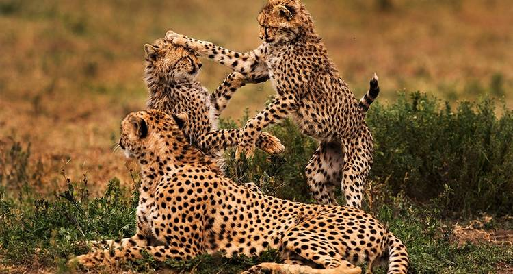 6 Days, 5 Nights Tanzania Budget Camping Safari Tour 1500 usd -  Travel Africa Safari Agency
