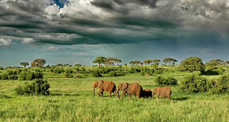 6 days  Luxury Masailand Safari - Northern Masailand Safaris