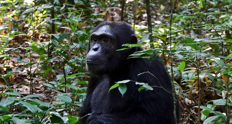 12-Day Trip Including Gorilla Trekking, Big 5 and Nature Sighting - Home to Africa
