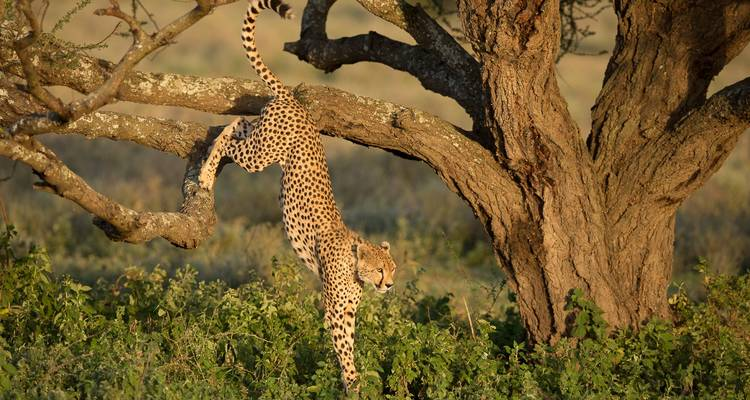 Photography Safari  - Bravo Expeditions and Safaris