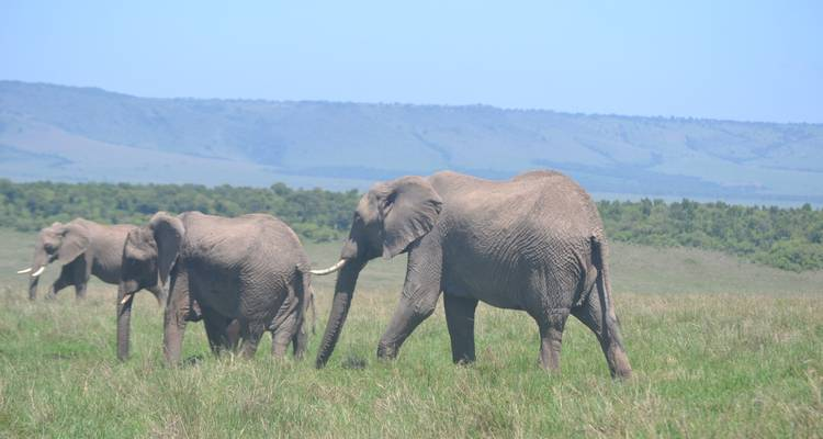 10 Days Discover Kenya Tour in Luxury Lodges    - Pam Tours and Travel