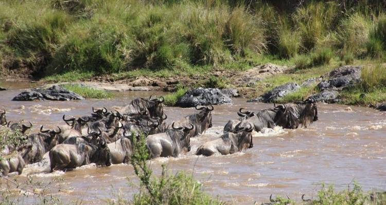5 Days Masai Mara Wildlife Safari - Steppe Dogs Adventures Ltd