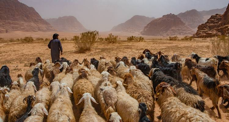Wadi Rum - A Bedouin Expedition With Camels - Rahhalah Explorers