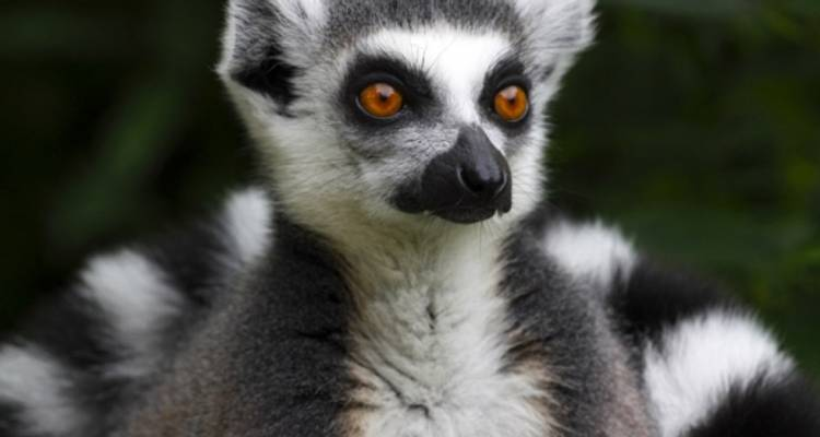 Magic of Madagascar - Peregrine Adventures