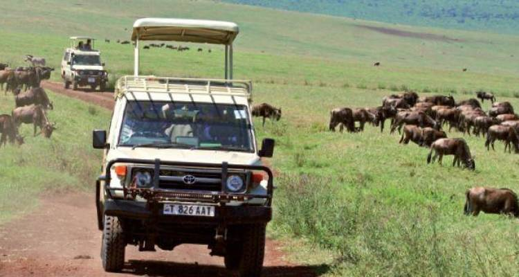 Game Parks and Gorillas - Acacia Adventure Holidays