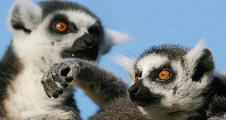 Highlights of Madagascar - G Adventures