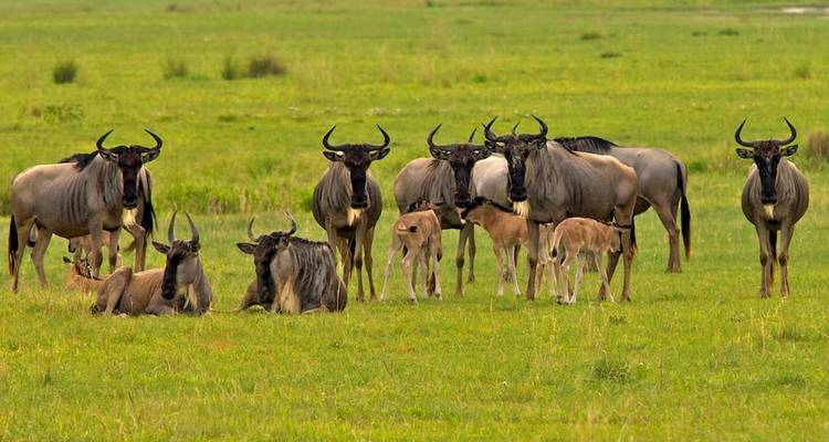 Northern Tanzania Riding Safari - Real Life Adventure Travel
