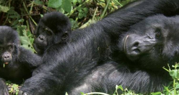 Ocean to Gorillas - Acacia Adventure Holidays