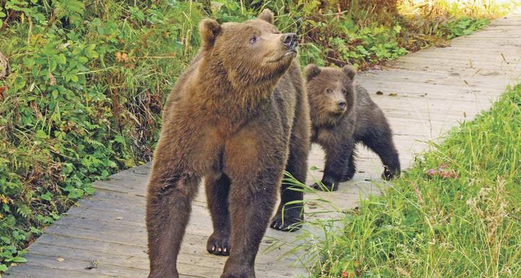 Grizzly & Polar Bear Adventure - Scenic Luxury Cruises & Tours
