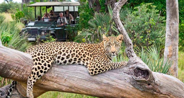 South Africa Discovery 2018 - Scenic Luxury Cruises & Tours