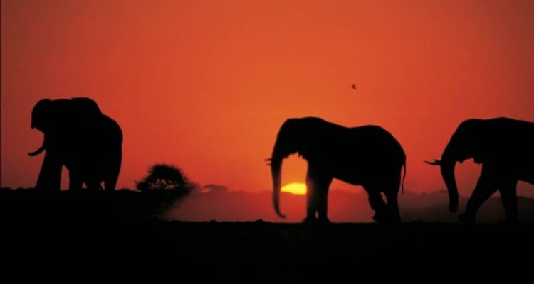 Kenya Safari Extension - World Expeditions