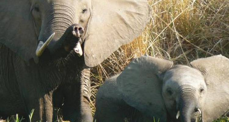 Moremi and Chobe to Vic Falls Safari - World Expeditions