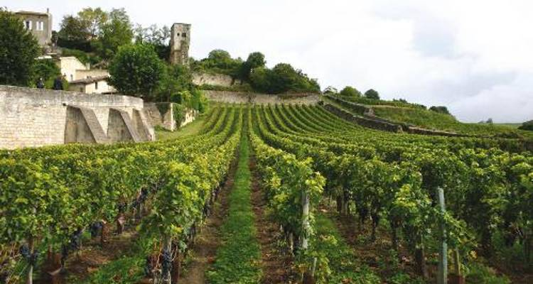 Bordeaux Vineyard Walk - UTracks
