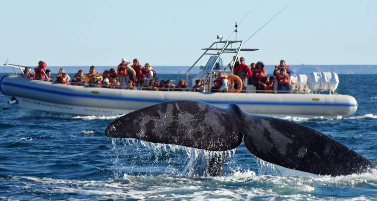 Peninsula Valdes - Sea Wild Life - Say Hueque Argentina & Chile Journeys