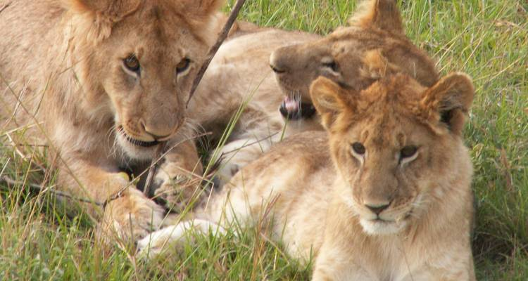7 Days Kenya Adventure Safari - Arlom Kenya Safaris