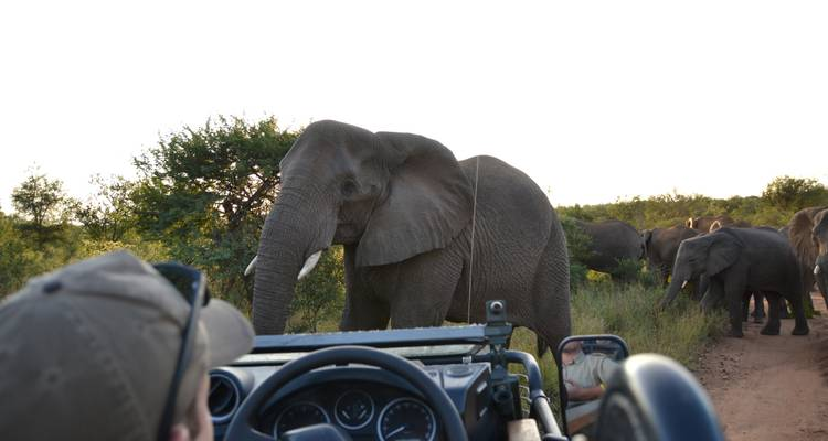 Wildlife Research Expedition in Karongwe National Park, South Africa (14n+) - Experiential Education Limited t/a GVI
