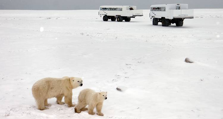 Churchill Polar Bears Independent Adventure - G Adventures