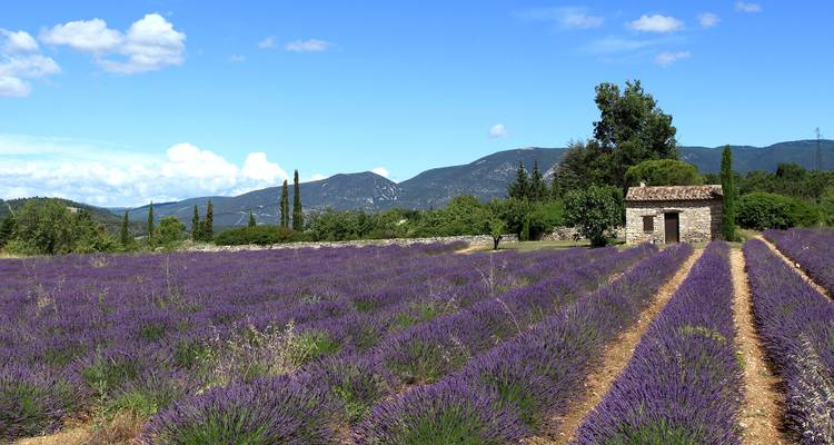 Burgundy & Provence (Avignon to Lyon, 2018) - Uniworld Boutique River Cruise Collection