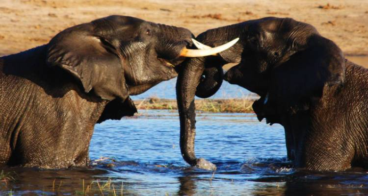 Vic Falls to Kruger - Intrepid Travel