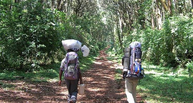 Kilimanjaro Climb Umbwe Route - Sed Adventures Tours and Safaris