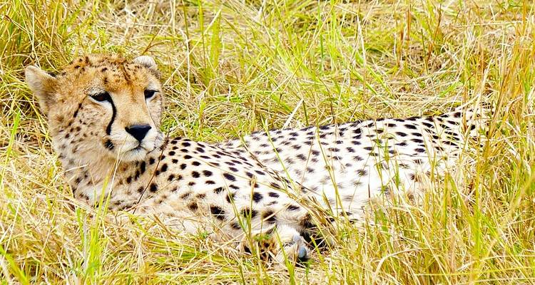 Great Migration Masai Mara and Serengeti - Sed Adventures Tours and Safaris