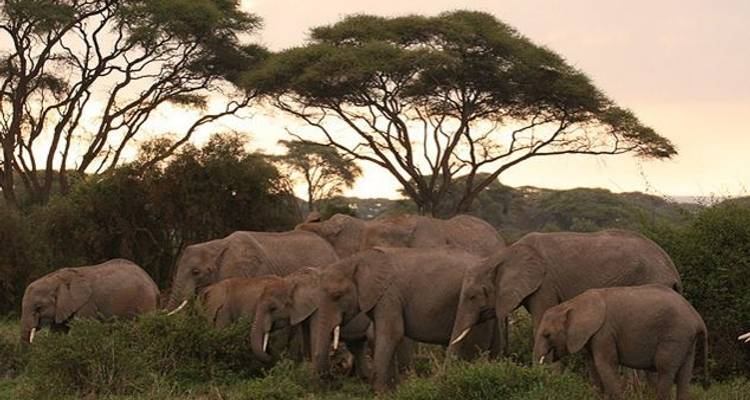 Experience the Magic of Kenya, Amboseli - Sed Adventures Tours and Safaris