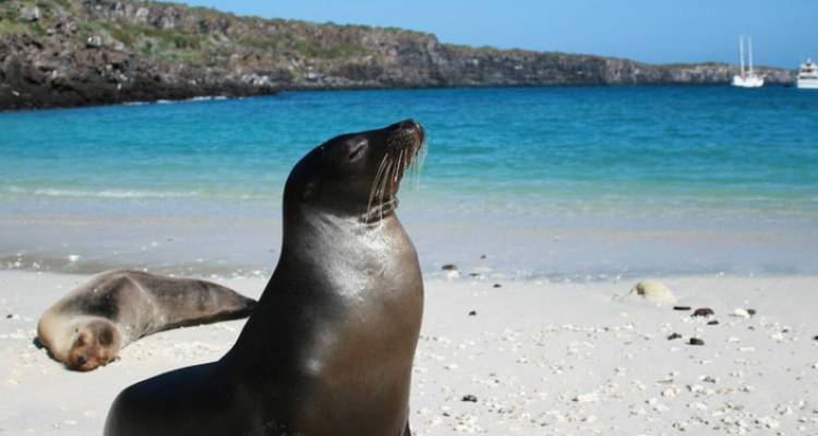 Active Galapagos - Intrepid