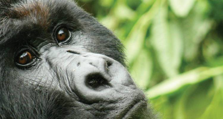 Gorillas & Game Parks - Intrepid Travel