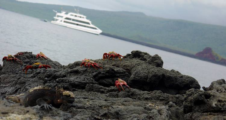 Galápagos — West Islands Aboard the Archipell I/II - G Adventures
