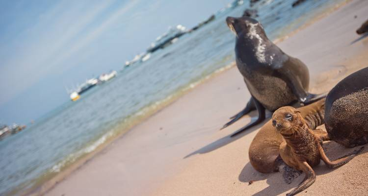 Galápagos — North, Central & South Islands aboard the Archipell I - G Adventures