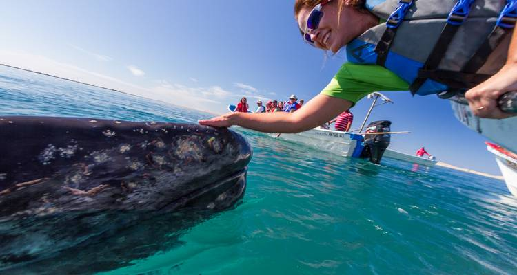 Whale Watching and the Best of Baja - Todos Santos Eco Adventures