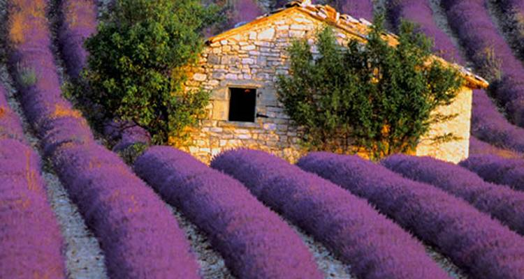 Best of Provence Tour - Food N' Wine Vacations