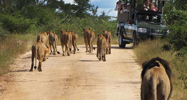 Kruger and Victoria Falls Accommodated - Acacia Adventure Holidays