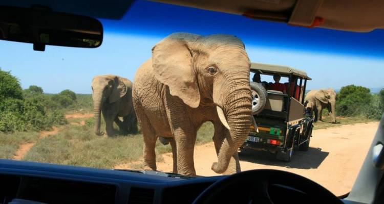 Garden Route and Addo Adventure - Hotspots2c