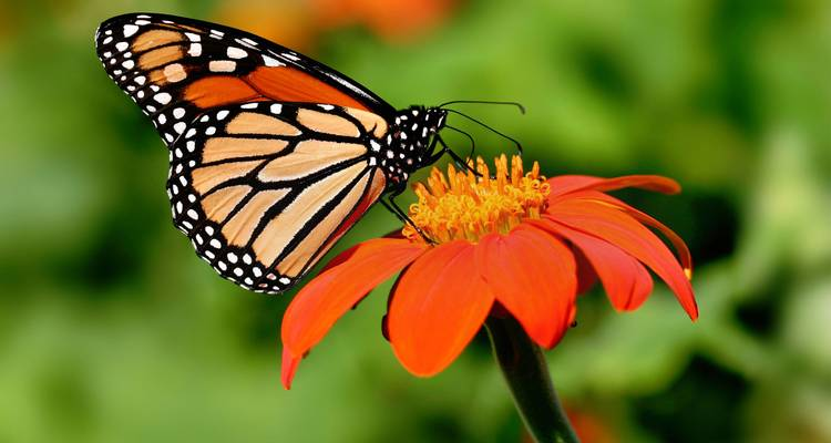 Mexico Monarch Butterfly Trail - G Adventures