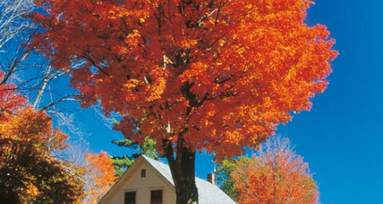 New England's Fall Foliage (Summer 2018) - Insight Vacations